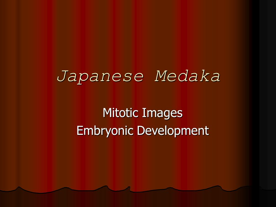 Japanese Medaka Mitotic Images Embryonic Development