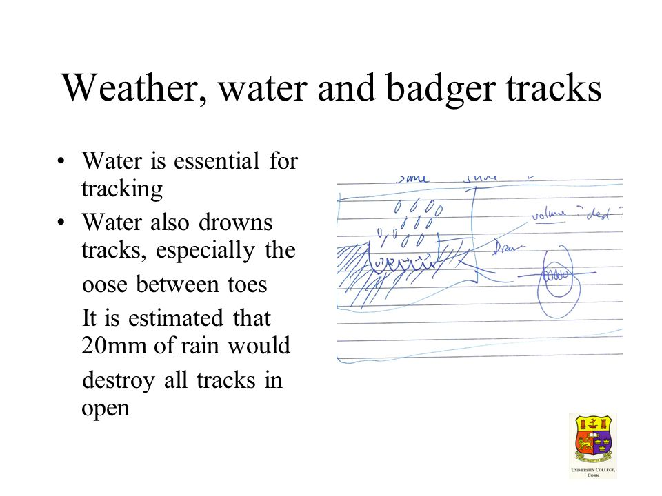 Weather, water and badger tracks Water is essential for tracking Water also drowns tracks, especially the oose between toes It is estimated that 20mm of rain would destroy all tracks in open
