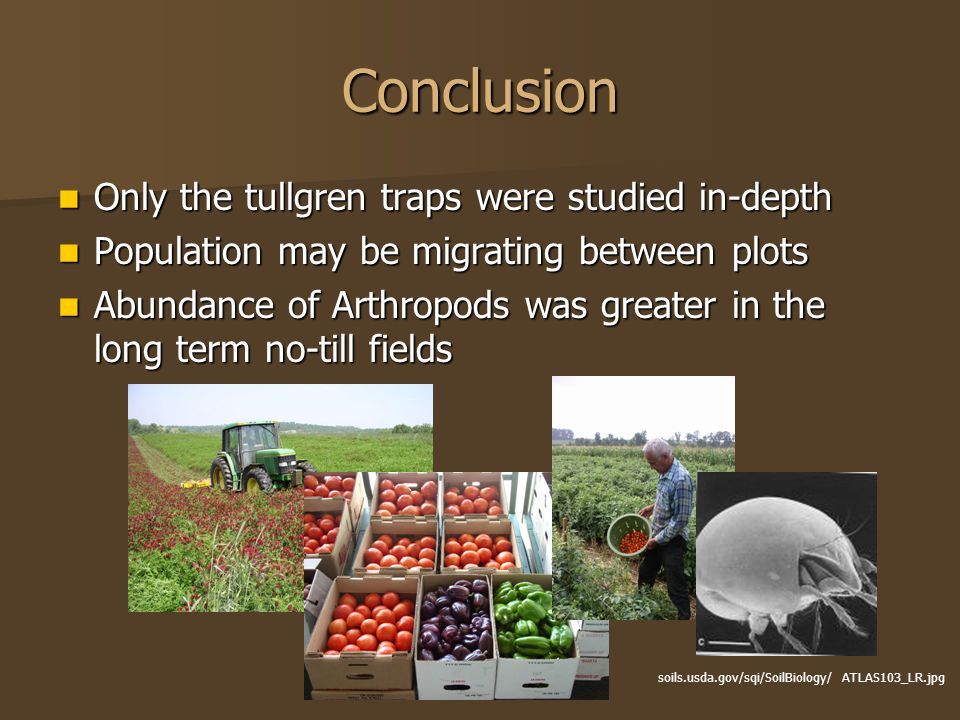 Conclusion Only the tullgren traps were studied in-depth Only the tullgren traps were studied in-depth Population may be migrating between plots Popul