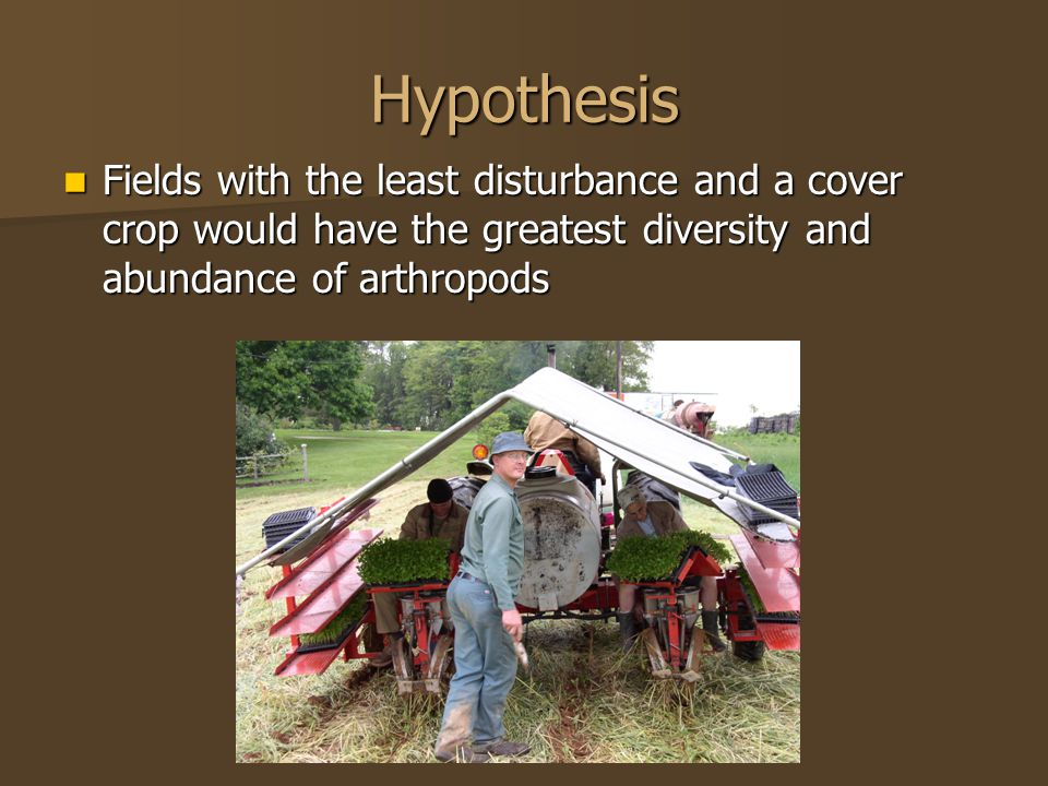 Hypothesis Fields with the least disturbance and a cover crop would have the greatest diversity and abundance of arthropods Fields with the least dist
