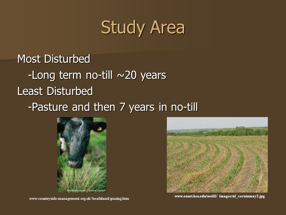 Study Area Most Disturbed -Long term no-till ~20 years Least Disturbed -Pasture and then 7 years in no-till www.countryside-management.org.uk/ heathland/grazing.htm www.oznet.ksu.edu/notill/ images/nf_corninmay2.jpg