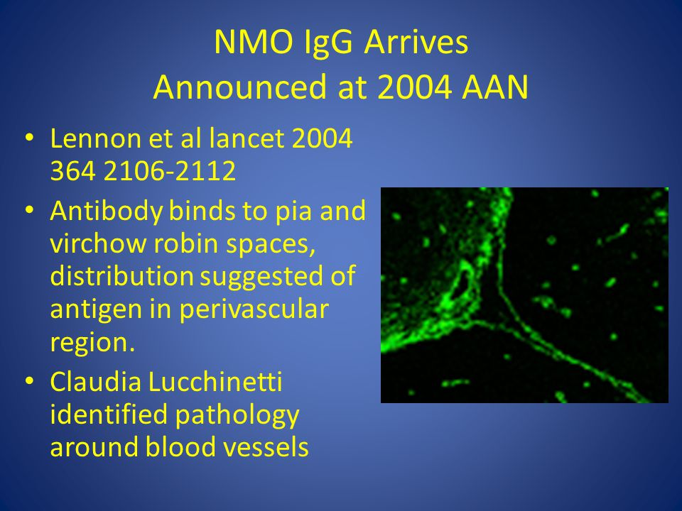 NMO IgG Arrives Announced at 2004 AAN Lennon et al lancet 2004 364 2106-2112 Antibody binds to pia and virchow robin spaces, distribution suggested of