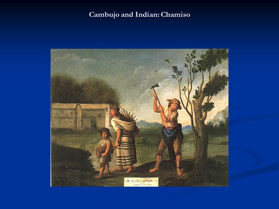 Cambujo and Indian: Chamiso