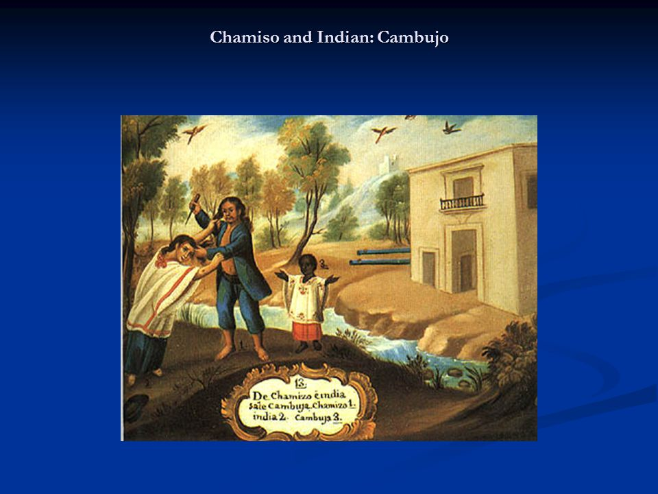 Chamiso and Indian: Cambujo