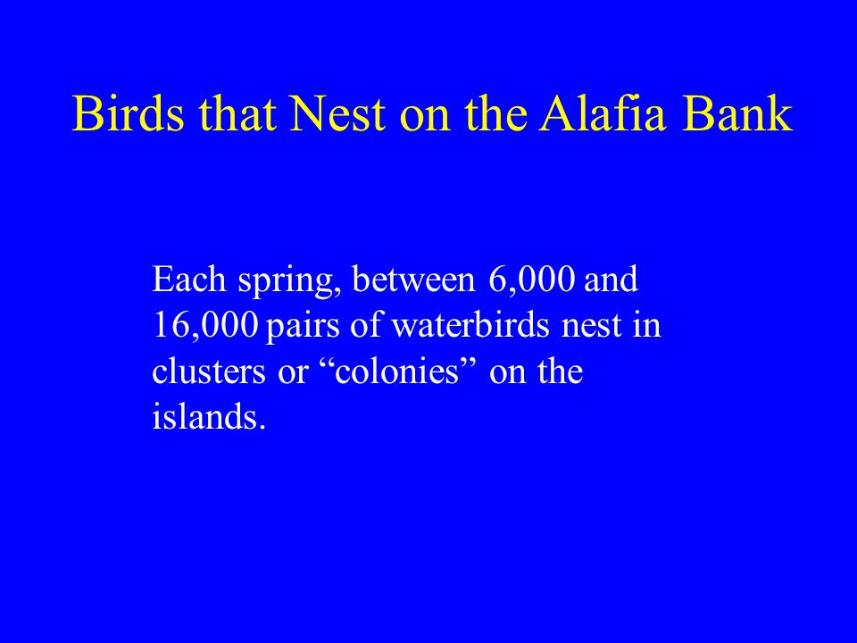 Each spring, between 6,000 and 16,000 pairs of waterbirds nest in clusters or colonies on the islands.