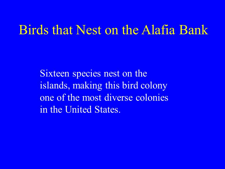 Sixteen species nest on the islands, making this bird colony one of the most diverse colonies in the United States.