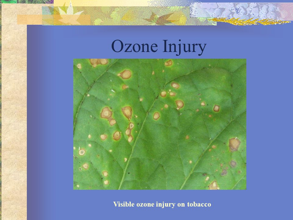 Visible ozone injury on tobacco