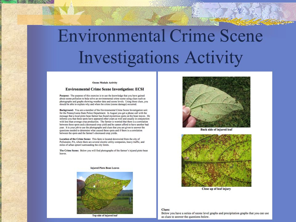 Environmental Crime Scene Investigations Activity