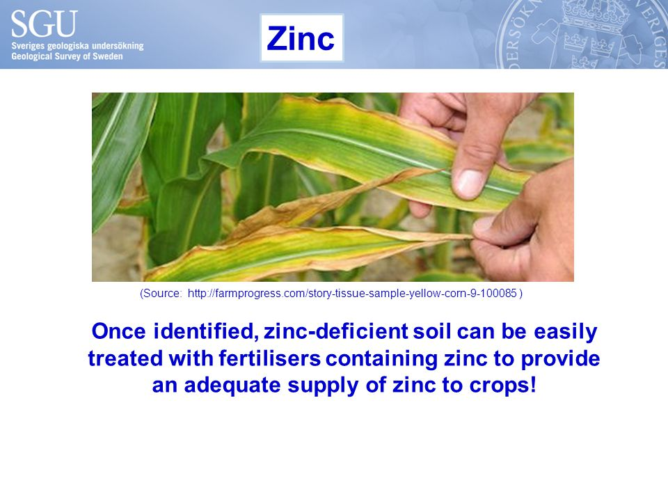 Once identified, zinc-deficient soil can be easily treated with fertilisers containing zinc to provide an adequate supply of zinc to crops! Zinc (Sour