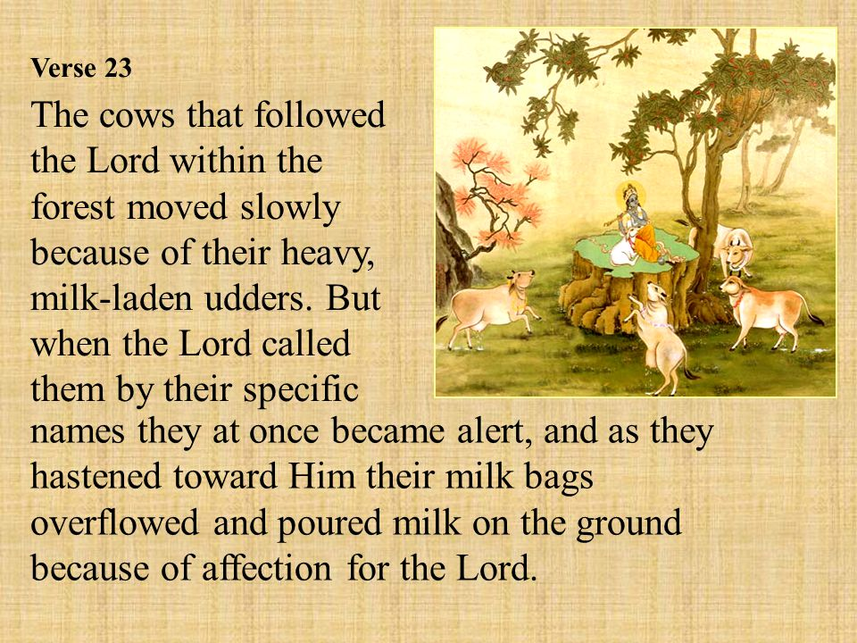 Verse 23 The cows that followed the Lord within the forest moved slowly because of their heavy, milk-laden udders.