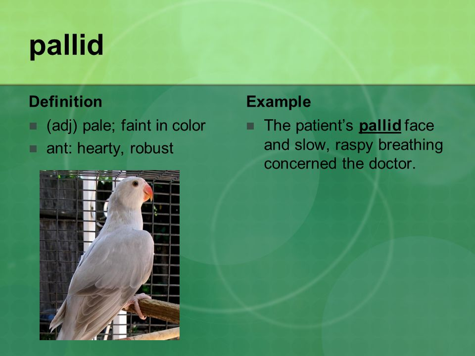 pallid Definition (adj) pale; faint in color ant: hearty, robust Example The patient's pallid face and slow, raspy breathing concerned the doctor.