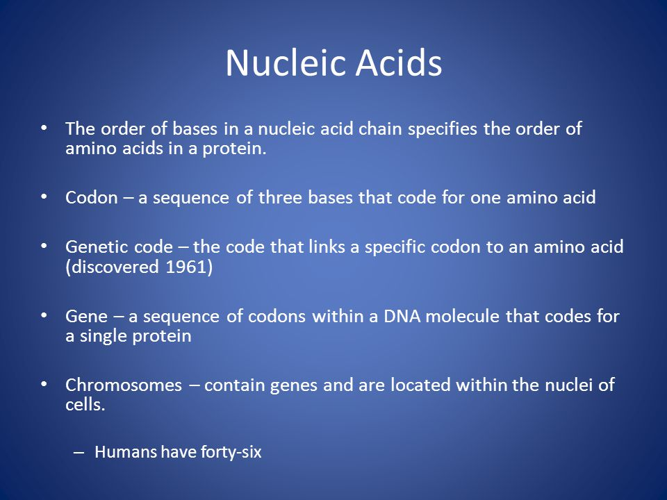 Nucleic Acids The order of bases in a nucleic acid chain specifies the order of amino acids in a protein.