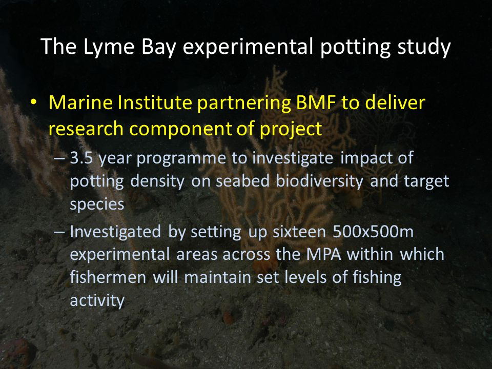 The Lyme Bay experimental potting study Marine Institute partnering BMF to deliver research component of project – 3.5 year programme to investigate impact of potting density on seabed biodiversity and target species – Investigated by setting up sixteen 500x500m experimental areas across the MPA within which fishermen will maintain set levels of fishing activity