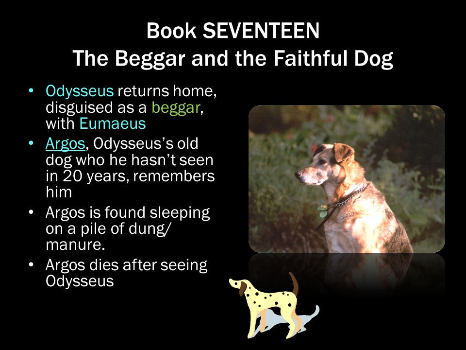 Book SEVENTEEN The Beggar and the Faithful Dog Odysseus returns home, disguised as a beggar, with Eumaeus Argos, Odysseus's old dog who he hasn't seen