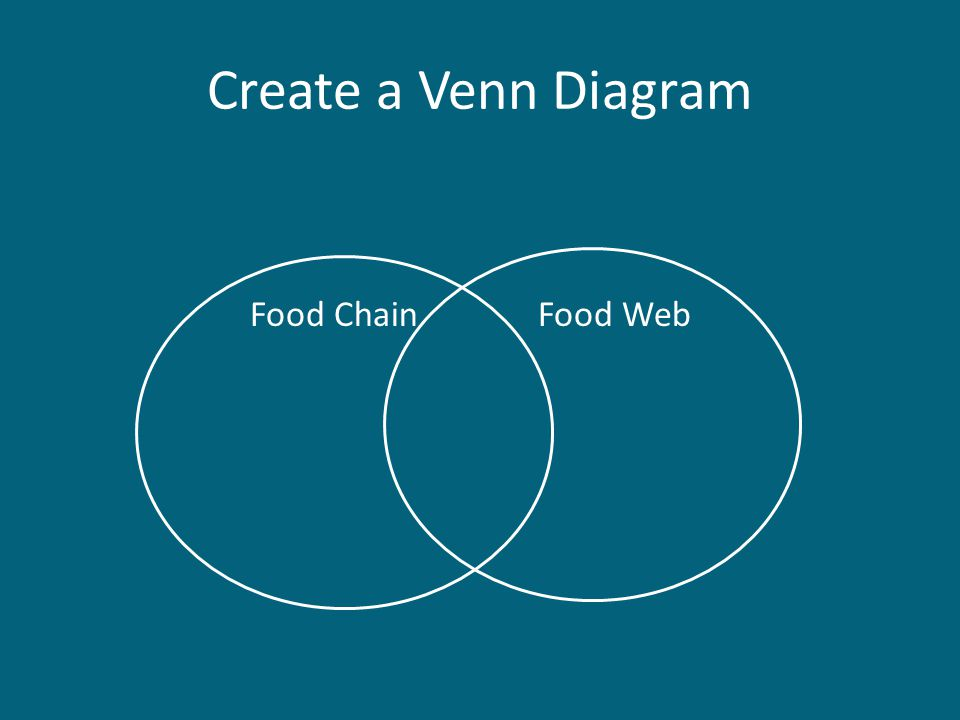 Create a Venn Diagram Food ChainFood Web