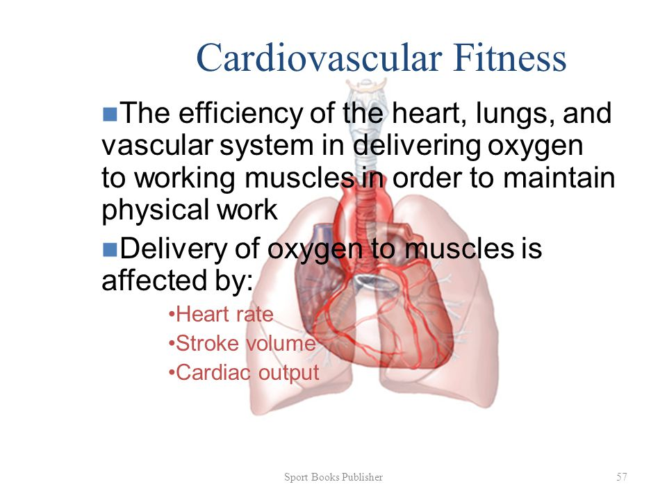 Sport Books Publisher 57 Cardiovascular Fitness The efficiency of the heart, lungs, and vascular system in delivering oxygen to working muscles in order to maintain physical work Delivery of oxygen to muscles is affected by: Heart rate Stroke volume Cardiac output