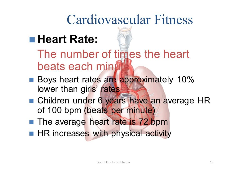 Sport Books Publisher 58 Cardiovascular Fitness Heart Rate: The number of times the heart beats each minute Boys heart rates are approximately 10% lower than girls' rates Children under 6 years have an average HR of 100 bpm (beats per minute) The average heart rate is 72 bpm HR increases with physical activity