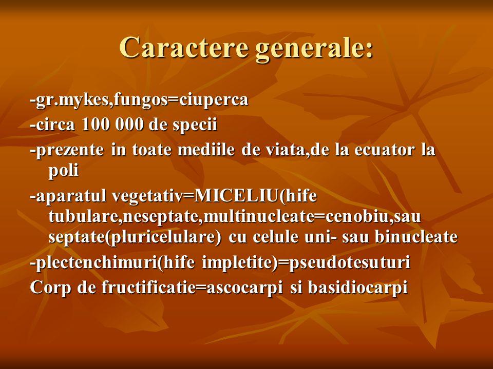Caractere generale: -gr.mykes,fungos=ciuperca -circa 100 000 de specii -prezente in toate mediile de viata,de la ecuator la poli -aparatul vegetativ=MICELIU(hife tubulare,neseptate,multinucleate=cenobiu,sau septate(pluricelulare) cu celule uni- sau binucleate -plectenchimuri(hife impletite)=pseudotesuturi Corp de fructificatie=ascocarpi si basidiocarpi