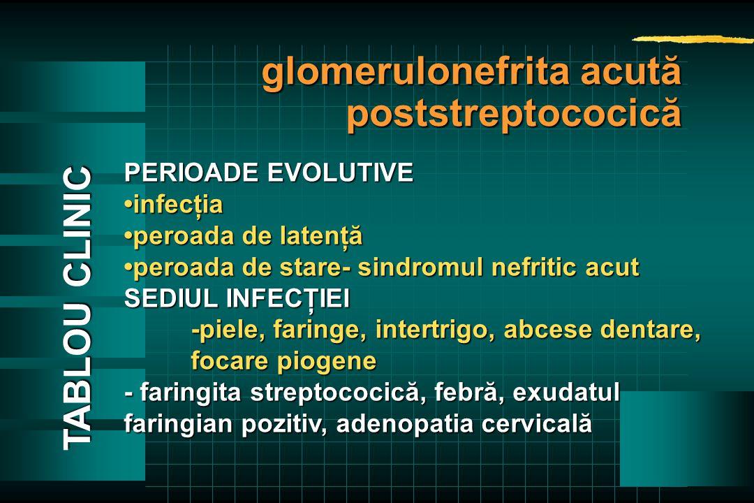 PERIOADE EVOLUTIVE infecţia peroada de latenţăperoada de latenţă peroada de stare- sindromul nefritic acutperoada de stare- sindromul nefritic acut SEDIUL INFECŢIEI -piele, faringe, intertrigo, abcese dentare, focare piogene - faringita streptococică, febră, exudatul faringian pozitiv, adenopatia cervicală TABLOU CLINIC glomerulonefrita acută poststreptococică