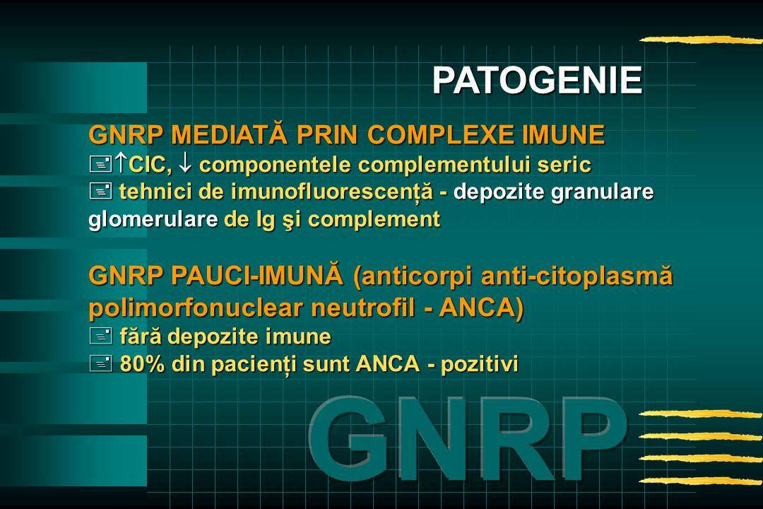 GNRP MEDIATĂ PRIN COMPLEXE IMUNE   CIC,  componentele complementului seric  tehnici de imunofluorescenţă - depozite granulare glomerulare de Ig şi complement GNRP PAUCI-IMUNĂ (anticorpi anti-citoplasmă polimorfonuclear neutrofil - ANCA) + fără depozite imune + 80% din pacienţi sunt ANCA - pozitivi PATOGENIE
