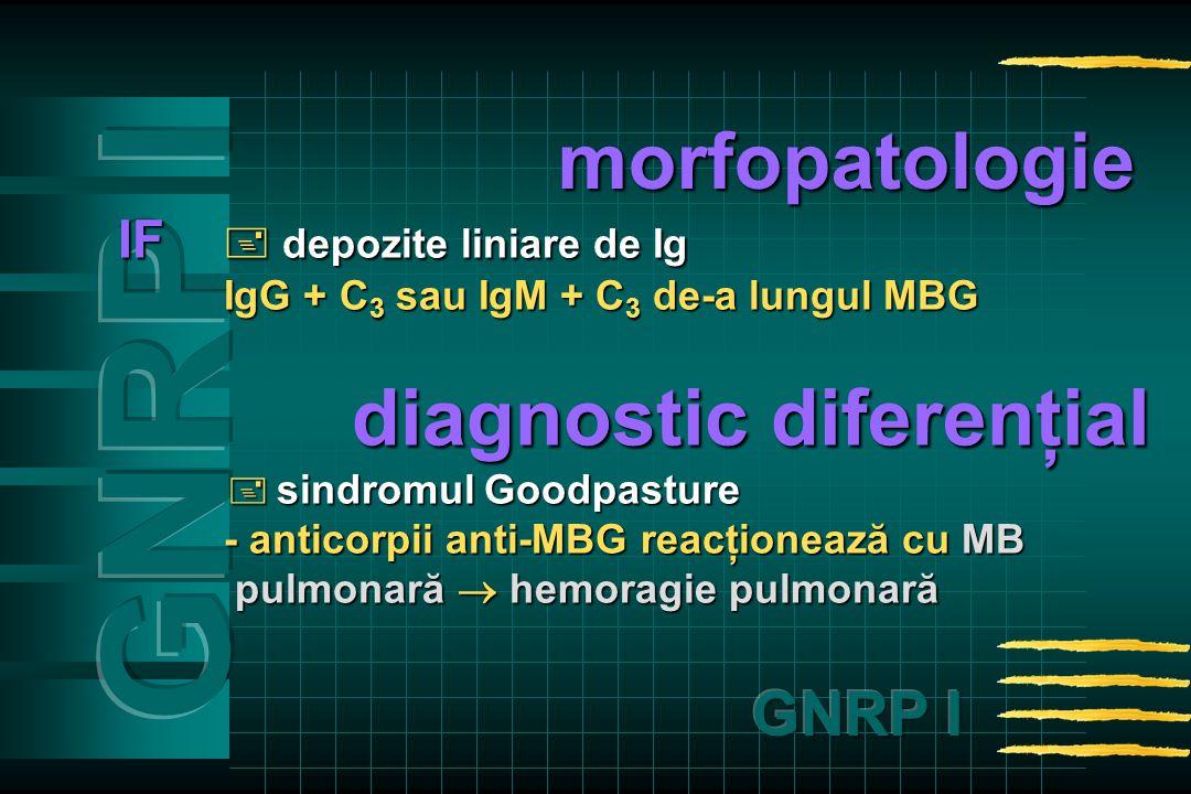 IF  depozite liniare de Ig IgG + C 3 sau IgM + C 3 de-a lungul MBG diagnostic diferenţial diagnostic diferenţial  sindromulGoodpasture  sindromul Goodpasture - anticorpii anti-MBG reacţionează cu MB pulmonară  hemoragie pulmonară pulmonară  hemoragie pulmonară