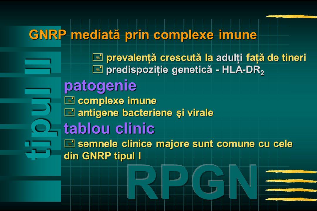  prevalenţă crescută la adulţi faţă de tineri  predispoziţie genetică - HLA-DR 2 patogenie  complexeimune  complexe imune  antigenebacteriene şi virale  antigene bacteriene şi virale tablou clinic  semnele clinice majore sunt comune cu cele din GNRP tipul I tipul Il GNRP mediată prin complexe imune