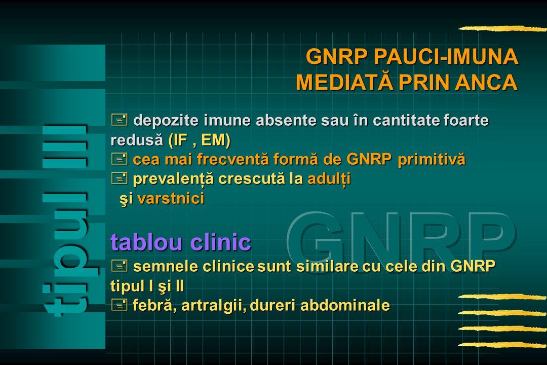  depozite imune absente sau în cantitate foarte redusă (IF, EM)  cea mai frecventă formă de GNRP primitivă  prevalenţă crescutăla adulţi  prevalenţă crescută la adulţi şi varstnici şi varstnici tablou clinic  semnele clinice sunt similare cu cele din GNRP tipul I şi II  febră, artralgii, dureri abdominale tipul Ill GNRP PAUCI-IMUNA MEDIATĂ PRIN ANCA