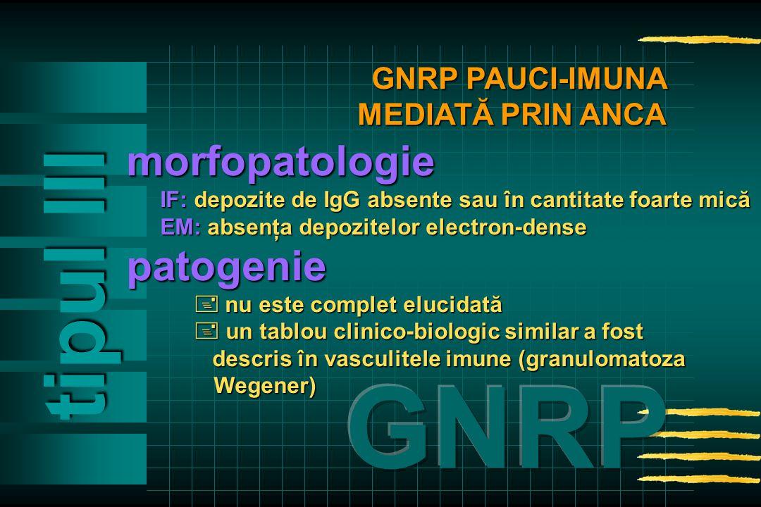 tipul Ill morfopatologie IF: depozite de IgG absente sau în cantitate foarte mică EM: absenţa depozitelor electron-dense patogenie  nu este complet elucidată  un tablou clinico-biologic similar a fost descris în vasculitele imune (granulomatoza descris în vasculitele imune (granulomatoza Wegener) Wegener) GNRP PAUCI-IMUNA MEDIATĂ PRIN ANCA