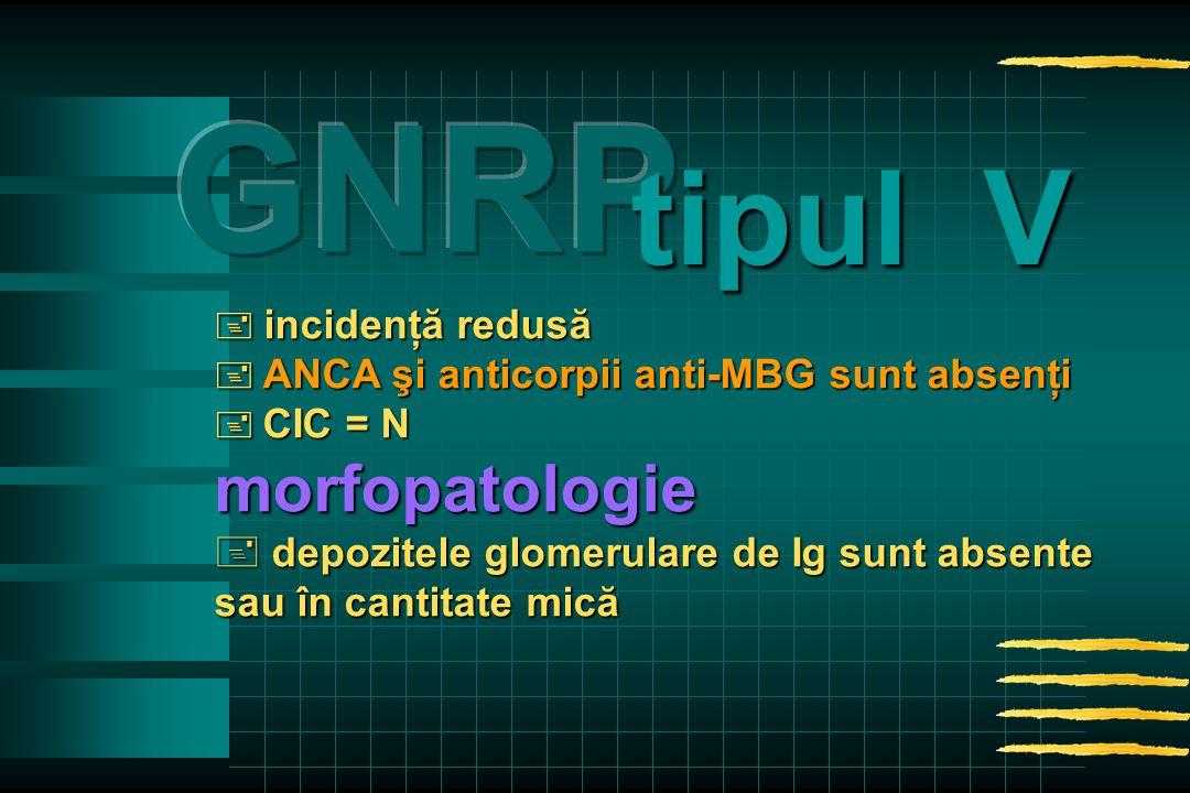  incidenţă redusă  ANCA şi anticorpii anti-MBG sunt absenţi  CIC = N morfopatologie + depozitele glomerulare de Ig sunt absente sau în cantitate mică tipul V