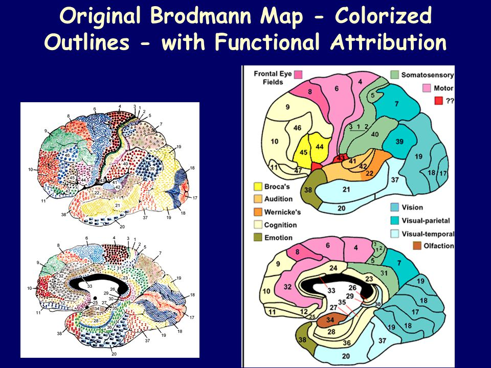 Original Brodmann Map - Colorized Outlines - with Functional Attribution