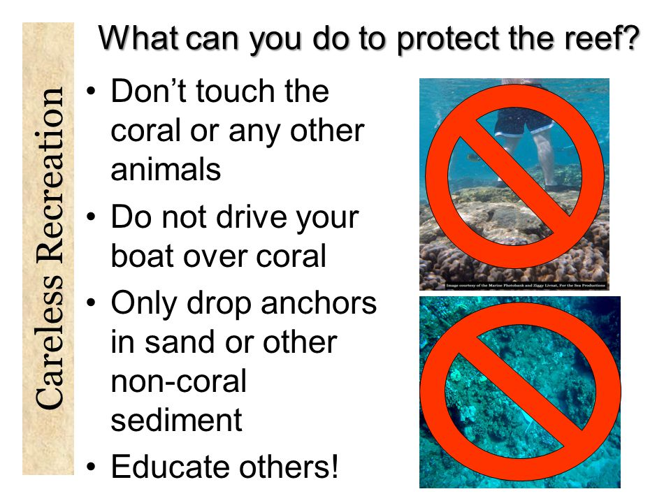 What can you do to protect the reef.