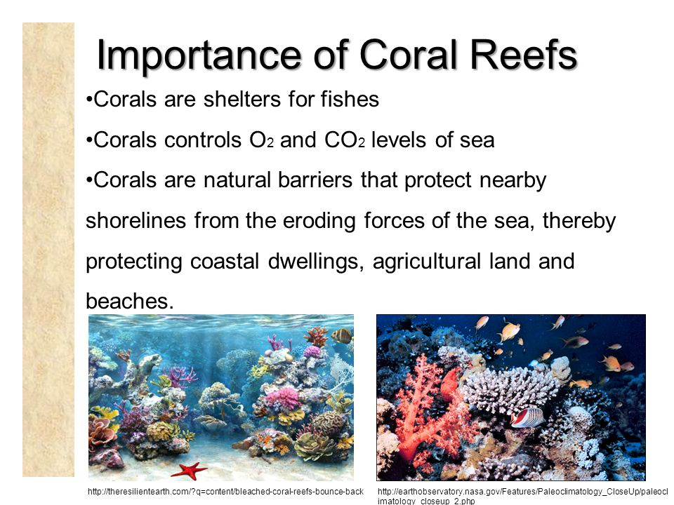Importance of Coral Reefs Corals are shelters for fishes Corals controls O 2 and CO 2 levels of sea Corals are natural barriers that protect nearby shorelines from the eroding forces of the sea, thereby protecting coastal dwellings, agricultural land and beaches.
