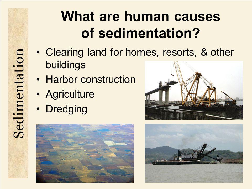 How does sedimentation threaten the coral reef habitat.