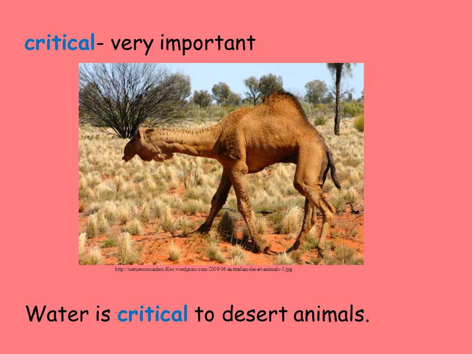 critical- very important Water is critical to desert animals.