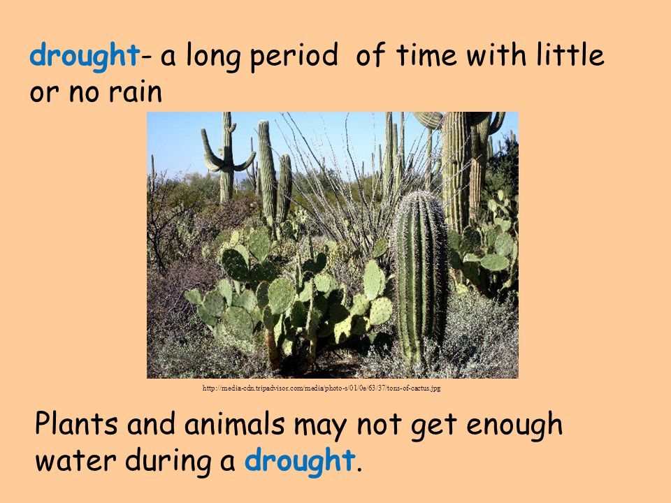 drought- a long period of time with little or no rain Plants and animals may not get enough water during a drought.