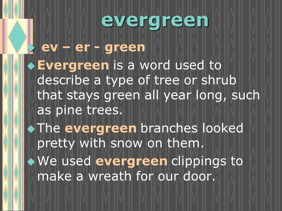 evergreen u u ev – er - green u u Evergreen is a word used to describe a type of tree or shrub that stays green all year long, such as pine trees.