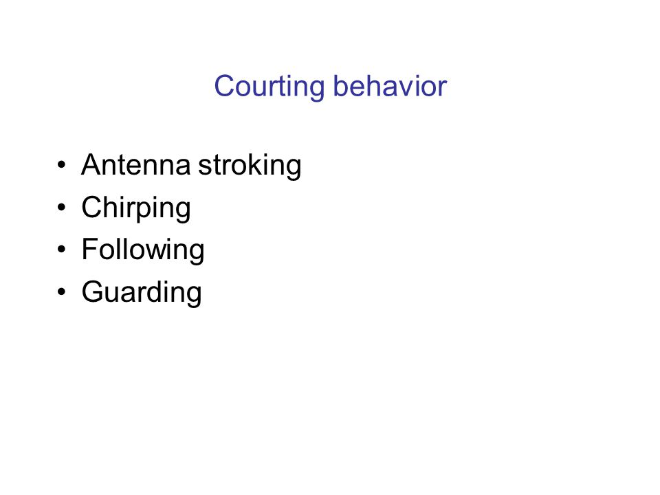 Courting behavior Antenna stroking Chirping Following Guarding
