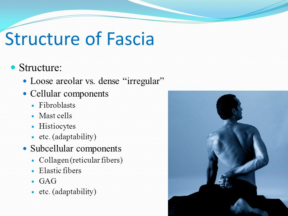 Structure of Fascia Structure: Loose areolar vs.