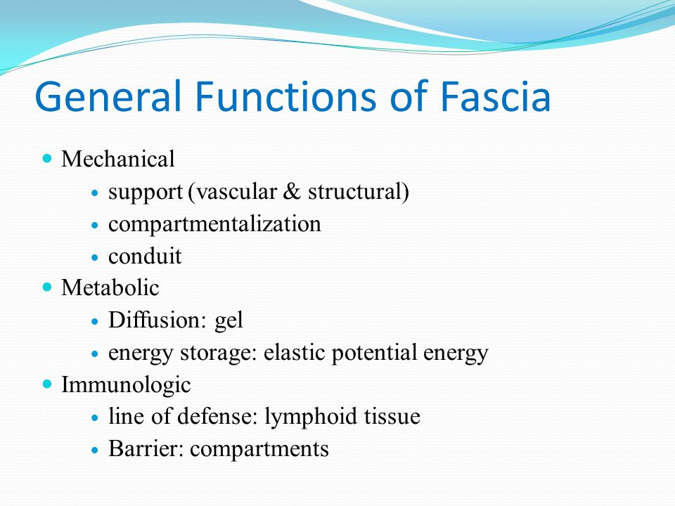 General Functions of Fascia Mechanical support (vascular & structural) compartmentalization conduit Metabolic Diffusion: gel energy storage: elastic p