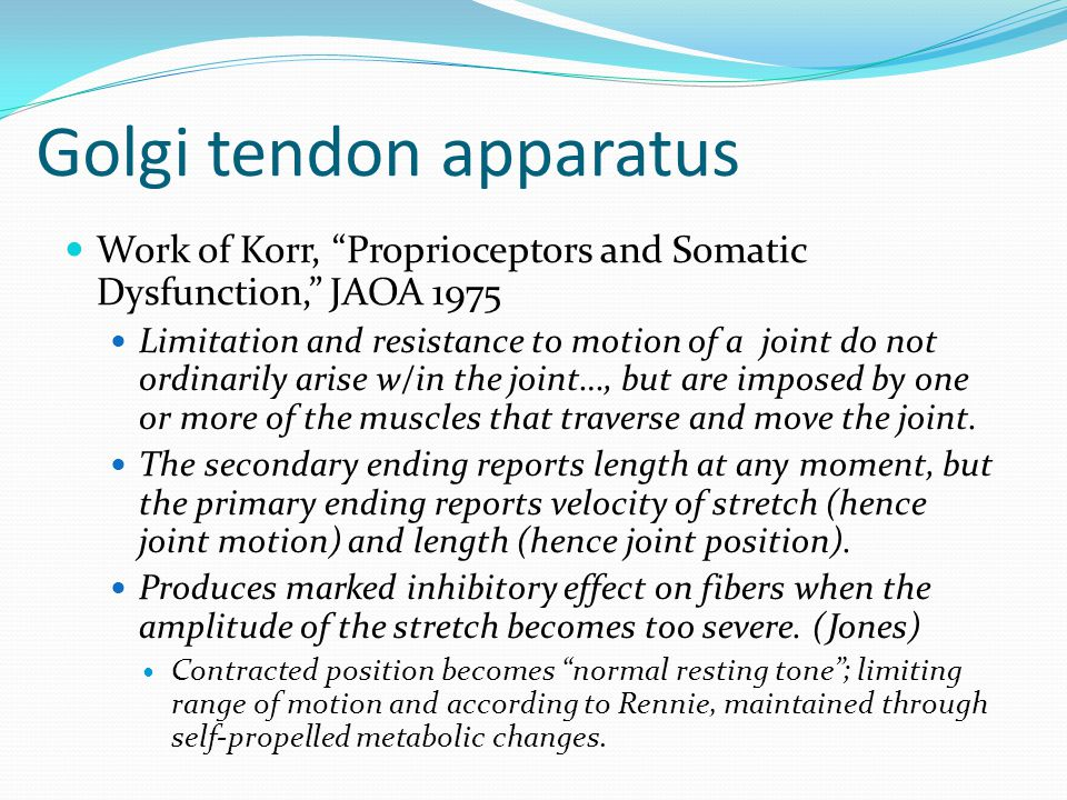 Golgi tendon apparatus Work of Korr, Proprioceptors and Somatic Dysfunction, JAOA 1975 Limitation and resistance to motion of a joint do not ordinarily arise w/in the joint…, but are imposed by one or more of the muscles that traverse and move the joint.