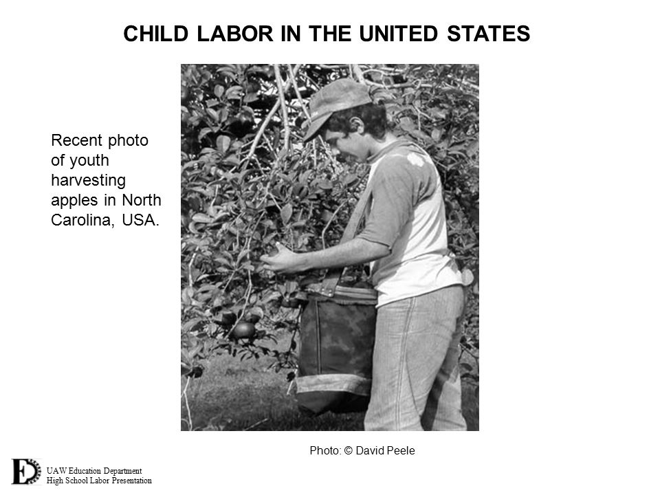 UAW Education Department High School Labor Presentation CHILD LABOR IN THE UNITED STATES Recent photo of youth harvesting apples in North Carolina, USA.