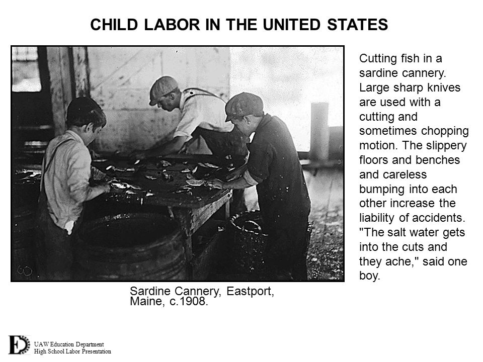 UAW Education Department High School Labor Presentation CHILD LABOR IN THE UNITED STATES Cutting fish in a sardine cannery.