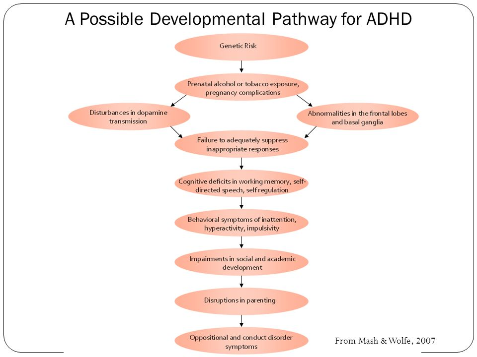 From Mash & Wolfe, 2007 A Possible Developmental Pathway for ADHD