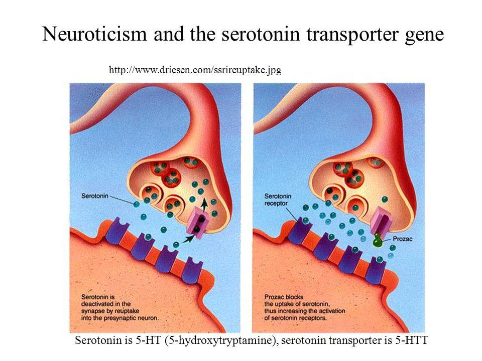 Neuroticism and the serotonin transporter gene http://www.driesen.com/ssrireuptake.jpg Serotonin is 5-HT (5-hydroxytryptamine), serotonin transporter