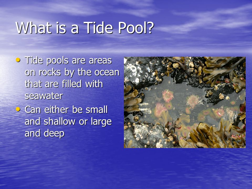 What is a Tide Pool.