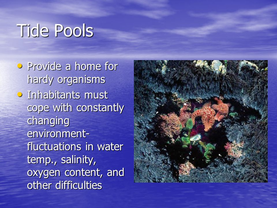 Tide Pools Provide a home for hardy organisms Provide a home for hardy organisms Inhabitants must cope with constantly changing environment- fluctuations in water temp., salinity, oxygen content, and other difficulties Inhabitants must cope with constantly changing environment- fluctuations in water temp., salinity, oxygen content, and other difficulties