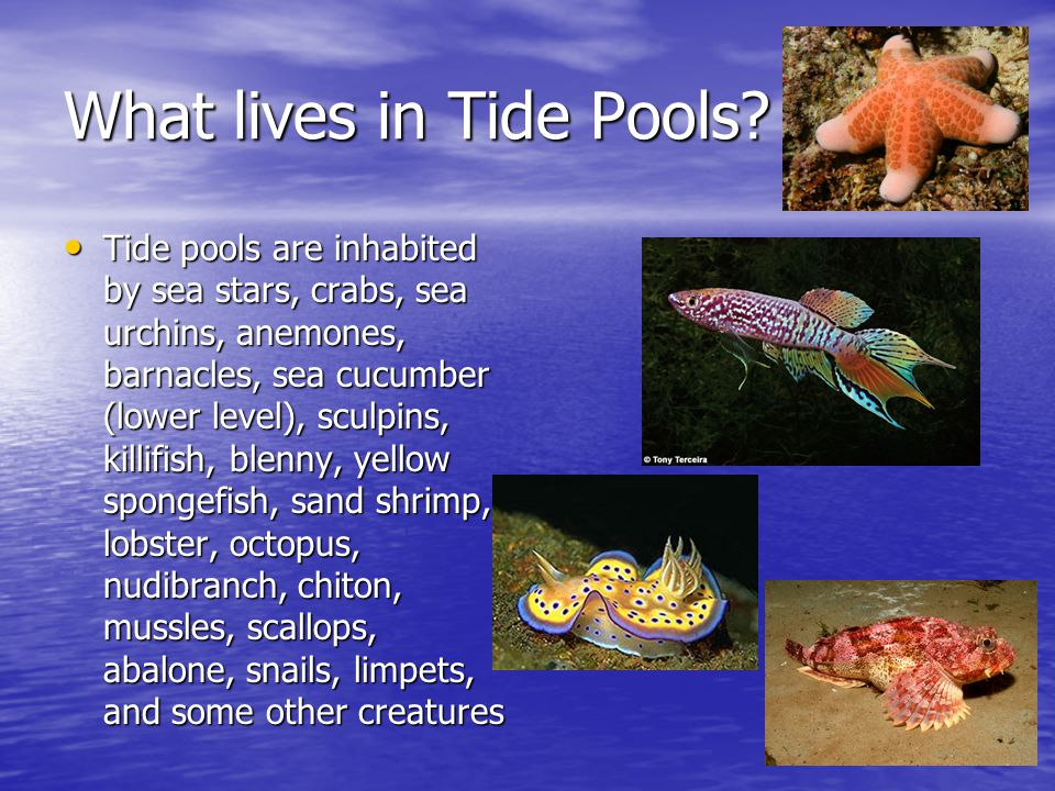 What lives in Tide Pools.