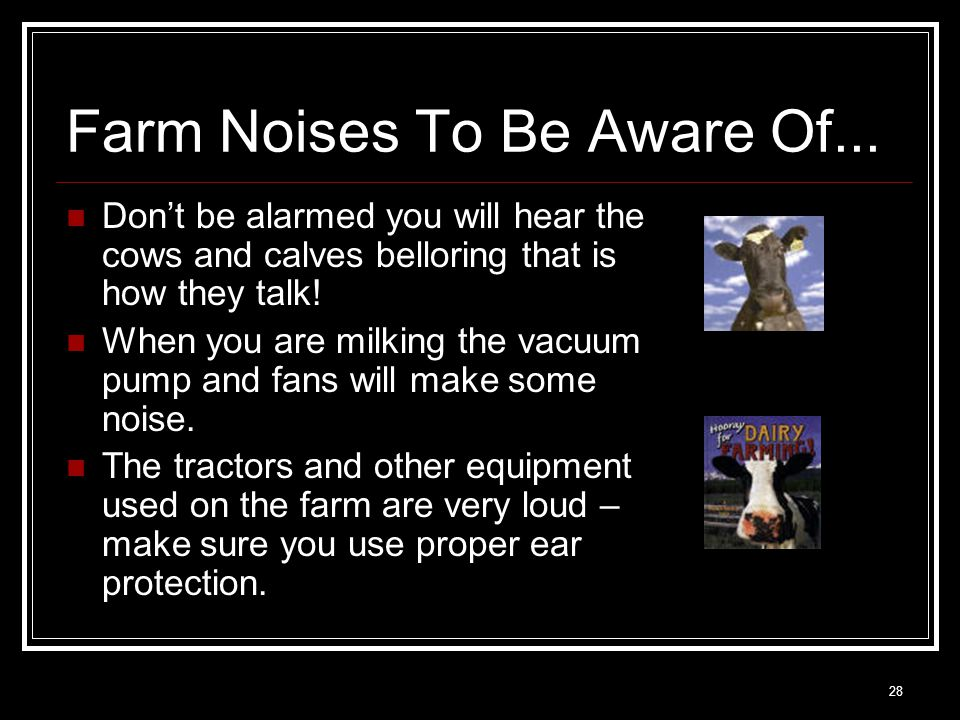 28 Farm Noises To Be Aware Of... Don't be alarmed you will hear the cows and calves belloring that is how they talk! When you are milking the vacuum p