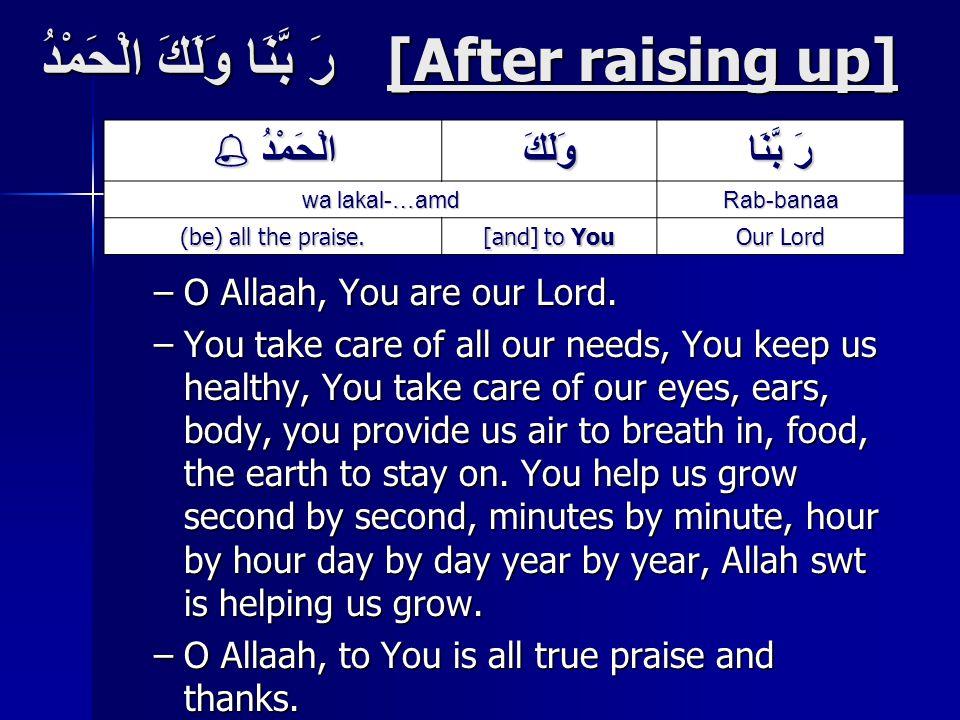 رَ بَّنَا وَلَكَ الْحَمْدُ [After raising up] –O Allaah, You are our Lord.