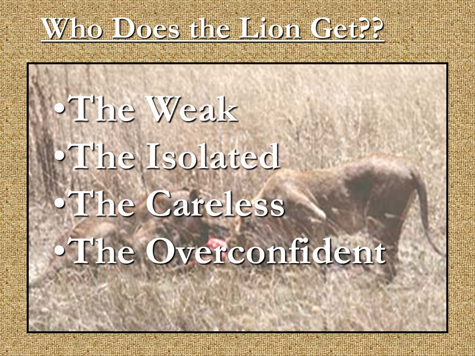 Who Does the Lion Get?? The WeakThe Weak The IsolatedThe Isolated The CarelessThe Careless The OverconfidentThe Overconfident